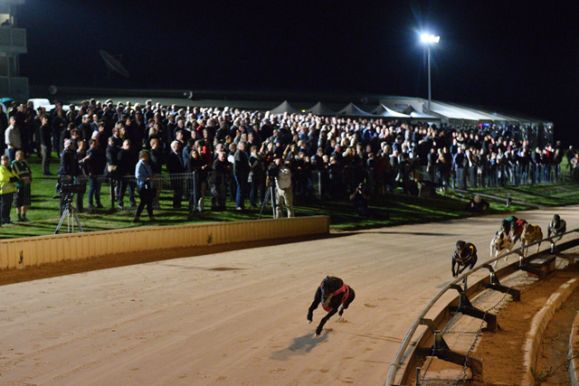 Warrnambool Greyhounds