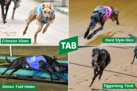 WARRNAMBOOL CUP: TAB opens markets on star-studded heats