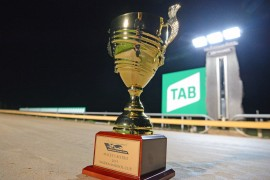Wednesday's TAB Warrnambool Cup night bringing group greyhound racing to your fingertips and into your loungeroom