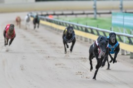 Team Dailly aims for domination in Warrnambool Cup