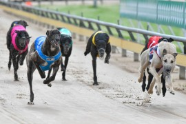 Dailly chases fourth Warrnambool Cup